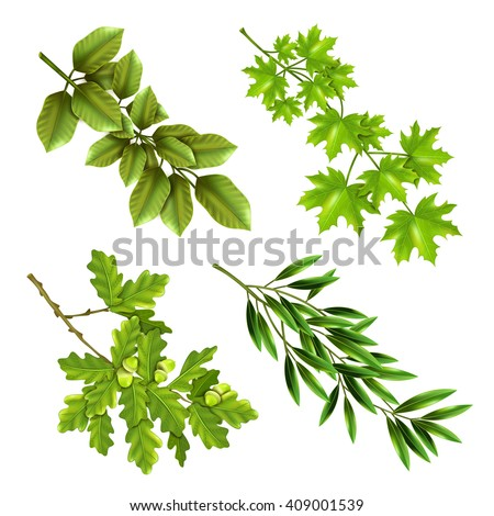 Realistic collection of green branches of deciduous trees with oak maple olive leaves isolated vector illustration  - stock vector
