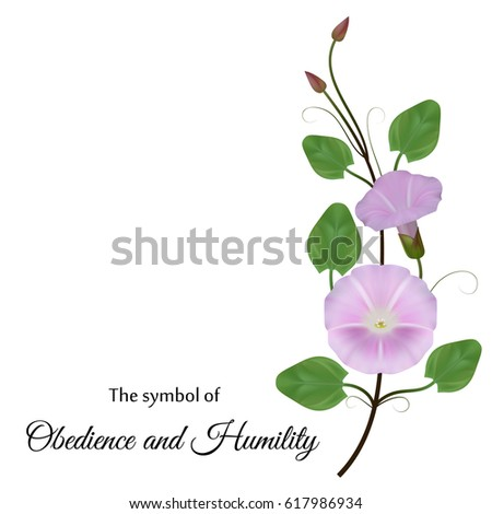 Realistic Convolvulus Symbol Obedience Humility Stock Vector