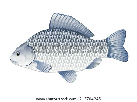 Realistic crucian carp, eps10 illustration with transparent objects, isolated