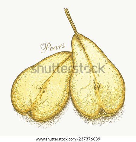 Realistic hand drawn vector pair of pears. No meshes, no gradients. Hand-drawn graphic vector eps8, color version - stock vector