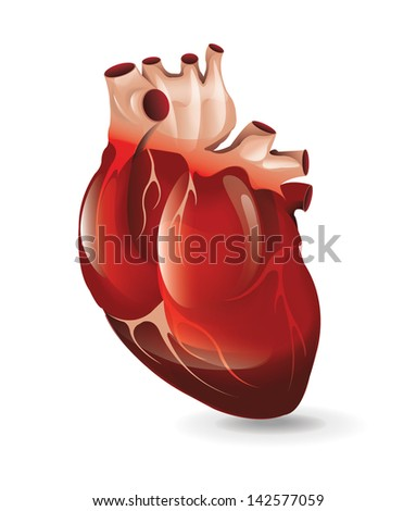 Realistic Heart - stock vector
