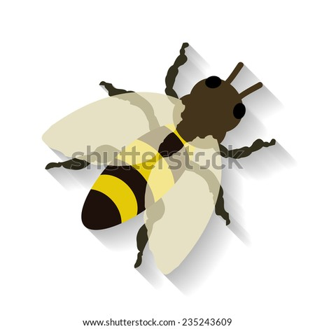 Realistic honey bee isolated on white background. Vector illustration EPS 10 - stock vector