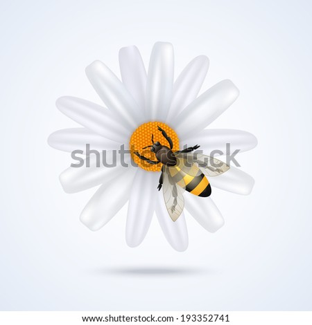 Realistic honey bee on daisy flower isolated on white background vector illustration - stock vector