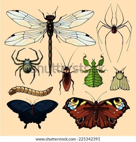 Realistic images of insects, set 2 - stock vector