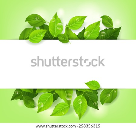 Realistic Leaves Background with White Space. Vector Illustration - stock vector