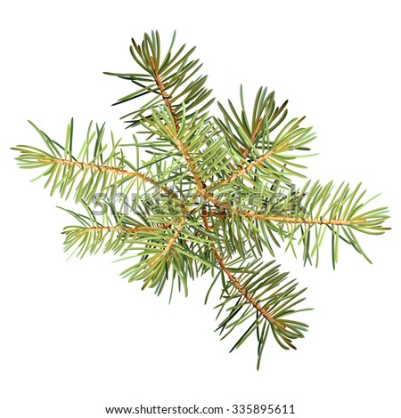 realistic needles spruce branches christmas tree isolated detailed vector - Branch Christmas Tree