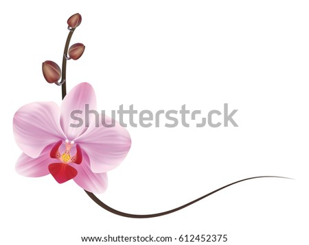Realistic orchid frame