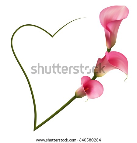 Realistic Pink Calla Lily Romantic Frame Stock Vector 640580284 ...