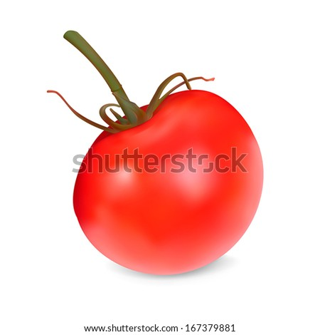 Realistic red Tomato. Vector illustration. Isolated on white background - stock vector