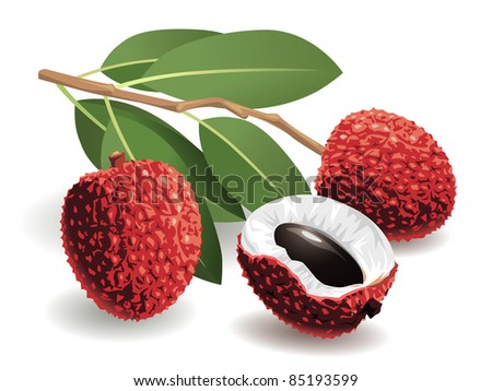 Realistic vector illustration of a bunch of lychees and a peeled lychee. - stock vector