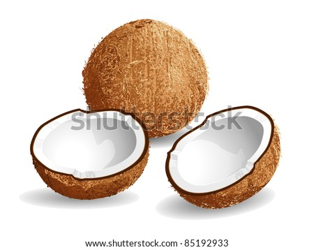 Realistic vector illustration of a coconut and half coconuts.