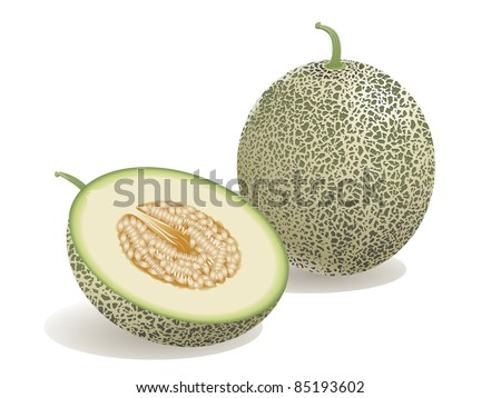 Realistic vector illustration of a melon and a half melon. - stock vector