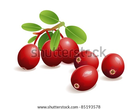 Realistic vector illustration of fresh cranberries, with leaves. - stock vector