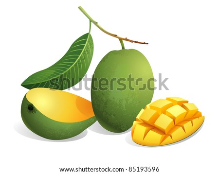 Realistic vector illustration of mangoes and a sliced mango. - stock vector