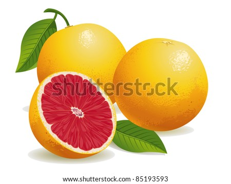 Realistic vector illustration of pink grapefruits and a half grapefruit. - stock vector