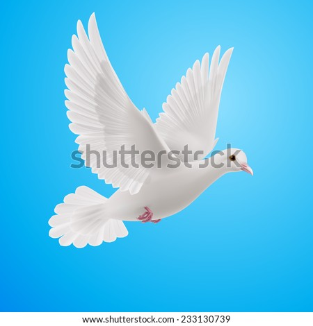 Realistic white dove on blue background. Symbol of peace
