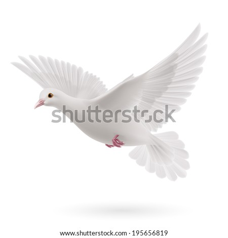 Realistic white dove on white background. Symbol of peace - stock vector