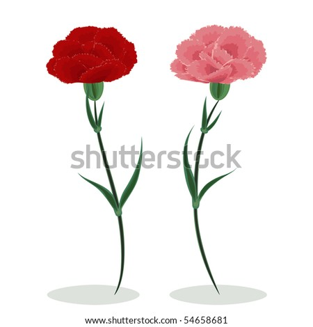 Red and pink carnations on a white background