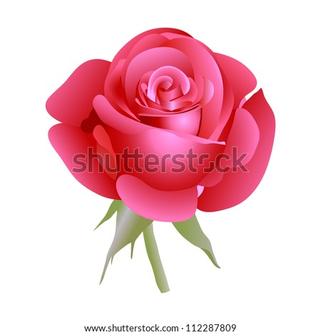 Red beautiful rose. Vector illustration. - stock vector
