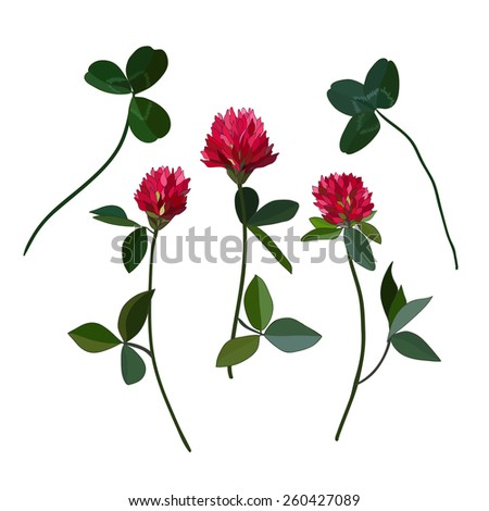 Red cloveres - stock vector