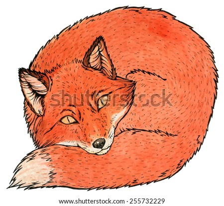 Red fox watercolor vector illustration - stock vector