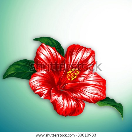 Red hibiscus flower blossom with leaves - stock vector
