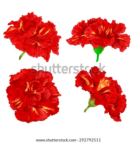 red hibiscus tropical flowers houseplants vector illustration illustration