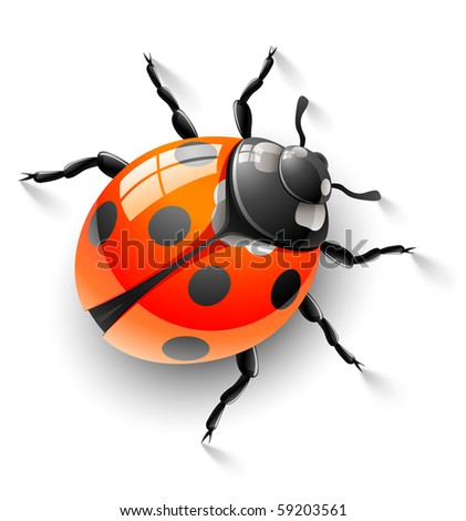red ladybird - stock vector