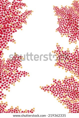 red maple leaves in autumn, isolated on white background. - stock vector