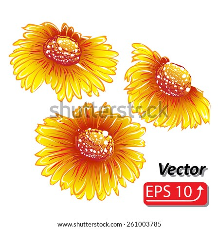 red orange yellow daisy flower watercolor Daisy Vector Flowers isolated on white background vector illustration - stock vector