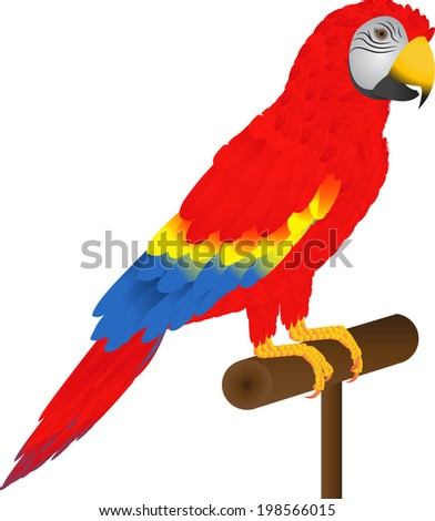 Red parrot macaw. - stock vector