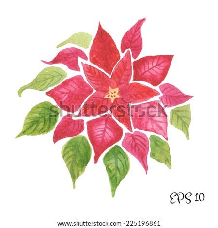 Red Poinsettia (Bethlehem Star), watercolor flower for your christmas design - stock vector