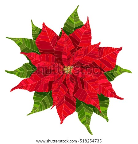 Red poinsettia flower realistic vector illustration