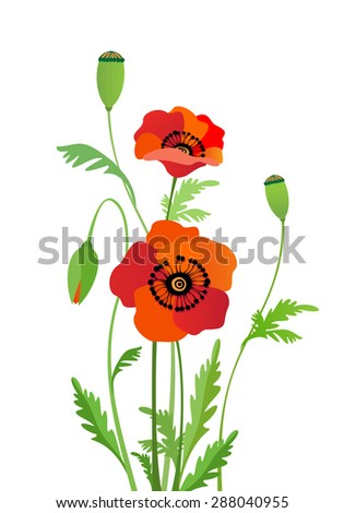Red poppies. Flowers. Vector illustration.