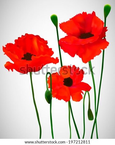 Red poppies on a gradient gray background. Vector illustration. - stock vector