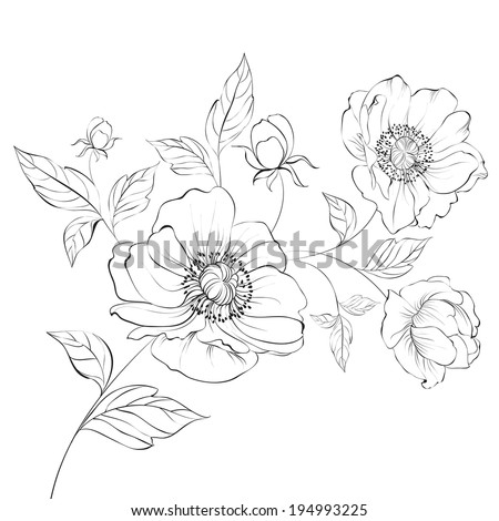 Red Poppy Flower Isolated on a White Background. Vector illustration. - stock vector