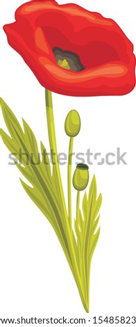 Red poppy isolated on the white. Vector - stock vector