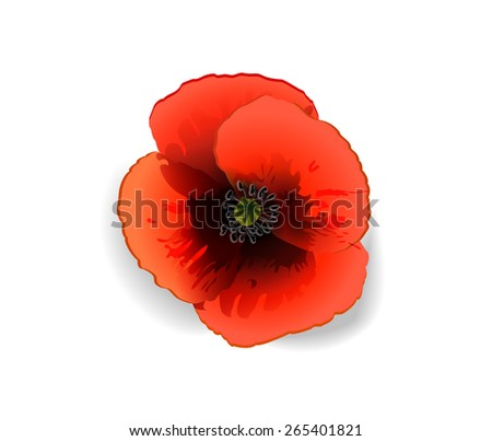 Red poppy isolated on white (vector image) - stock vector