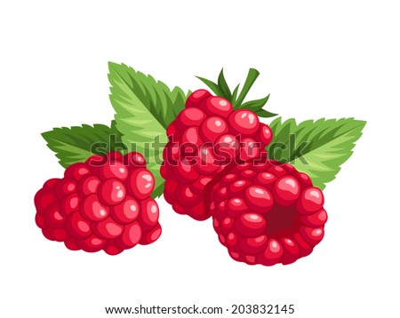 Red raspberries and green leaves isolated on a white background. Vector illustration. - stock vector