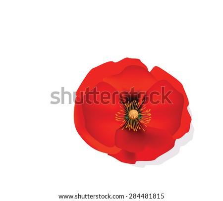 Red Romantic poppy flower isolated.  Vector illustration - stock vector