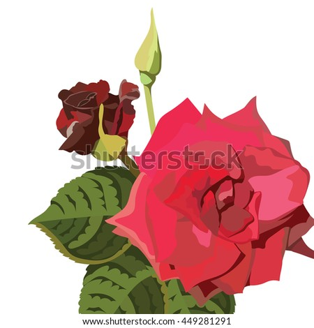 Red Rose isolated on white. Red rose. Vector rose flower for background greeting cards and invitations of the wedding, birthday, Valentine's Day, Mother's Day