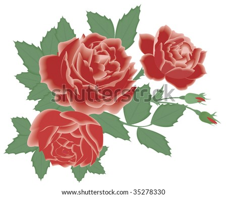 red roses - stock vector
