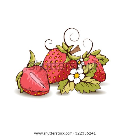 Red strawberry with yellow kernels, leaves, stalk, flowers and tendrils. Isolated from the background. It can be used in packaging, postcard, label. A strawberry cut in half. Vector outline image - stock vector
