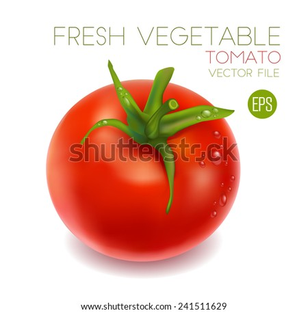 Red tomato isolated on white background, beautiful fresh vegetable. Vector illustration for advertising, packaging, banner, wallpaper.  - stock vector