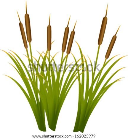 reeds - stock vector