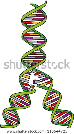 Replication of DNA - stock vector