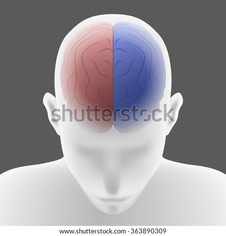 Basal Ganglia Stock Images, Royalty-Free Images & Vectors ...