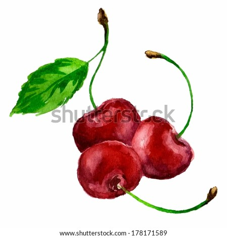 ripe cherry - hands painted with watercolors vector illustration
