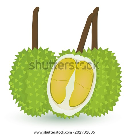 ripe durian vector design