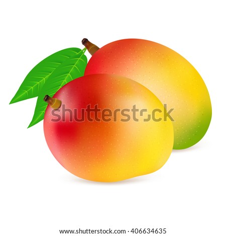 Ripe fresh mangoes with leaves isolated on white background. Realistic vector illustration. - stock vector